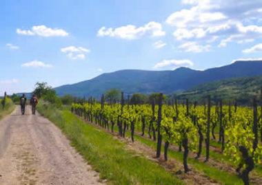 Stenvitalité - Alsace